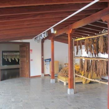 museopuropalmero7